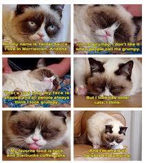 Meme Kitty - grumpy cat meme grumpy cat pinterest grumpy cat meme grumpy