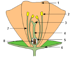 plant reproduction mrs smallwood u0027s science site