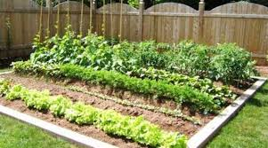 stylish container vegetable gardening beginners 5 best container