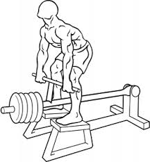 Incline Bench Muscle Group The Massive Muscle Anatomy And Body Building Guide You Always