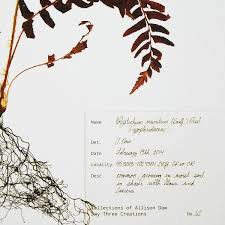 western fern pressed botanical print fern prints uncommongoods