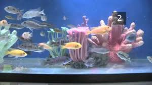 Tropical Fish Home Decor How To Choose Fish For A Tropical Fish Tank Youtube