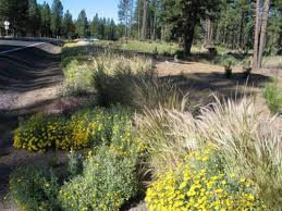 native plants to oregon chiloquin highway oregon rocky mountain bio productsrocky
