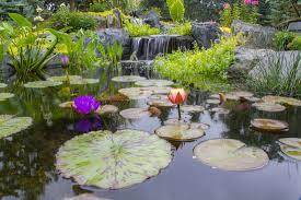 Patio Pond by Koi U0026 Goldfish Ponds Nh Chester Rockingham County New Hampshire