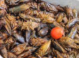 insecte cuisine images gratuites plat aliments insecte fruit de mer nikon