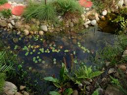 Frog Pond Backyard Backyard Habitat Ponds 101 Fish Thinkers