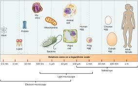 comparing prokaryotic and eukaryotic cells biology i