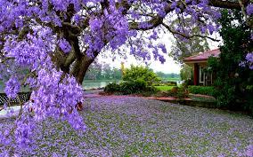 spring pics wallpaper 2560x1600 770 7 kb