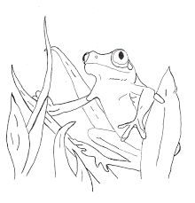 coloring pages animals arizona tree frog coloring page tree frog
