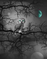 Home Decor Wall Art Black White Aqua Moon Owl Home Decor Wall Art Matted Picture