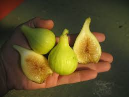 What Fruit Trees Grow In Texas - fig trees product categories just fruits and exotics