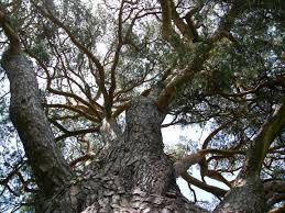 Define Tree Describing The Structure Of Trees Newton U0027s Apple Org Uk