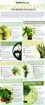how to garden without a garden u2014 best indoor plants thegoodstuff