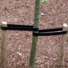 tree stakes quality tree stakes tree care products from ireland s online