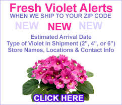 african violet grow light care instructions for african violets