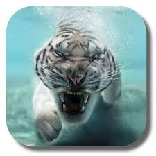 tiger apk tiger live wallpaper 2 4 15 apk apk mirror