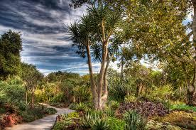 Huntington Botanical Garden by Images Usa Huntington Botanical Gardens San Marino Hdr Nature Trees