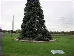 Washington Christmas Tree Farms - christmas tree farms in washington state home design ideas