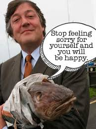 Stephen Meme - 6 stephen fry memes that will change the way you live your life