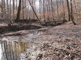 Tennessee Forest images Meeman shelby forest campground meeman shelby tn 1 hipcamper jpg