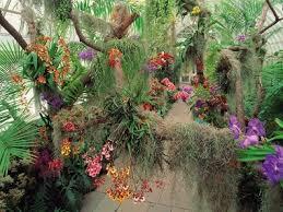 Botanical Garden Orchid Show 34 Best Orchid Show Images On Pinterest Orchid Show Botanical