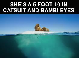 Cat Suit Meme - just 12 relatable memes from blue planet ii joe co uk