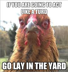 Rooster Meme - 27 very funny chicken pictures