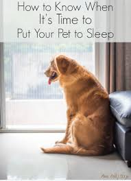 put dog to sleep how to when it s time to put your pet to sleep miss molly says