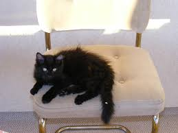 cat running into glass door eye problems in cats pethelpful