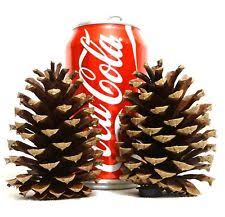 craft pine cones ebay