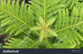 ornamental foliage plants decorative landscaping garden stock photo