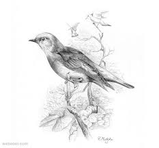 30 beautiful bird drawings and art works for your inspiration