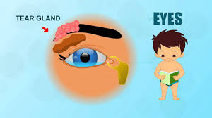 Anatomy Of Human Eye Ppt Eyes Human Body Parts Pre Animated Videos For Kids