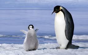 antarctic animals for kids wallpaper