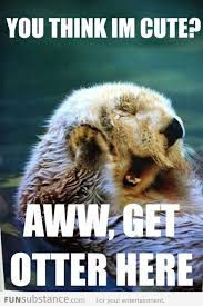 Sea Otter Meme - you re making me blush sea otters have always been my favorite