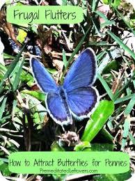 406 best butterfly bee garden ideas from the barn nursery