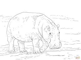 pygmy hippopotamus super coloring tegninger pastel pencils