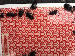 pest control company south river nj bed bug termite wildlife