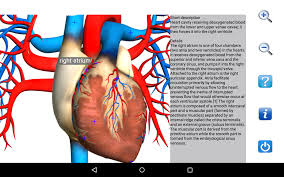 Heart Anatomy And Function Visual Anatomy Free Android Apps On Google Play