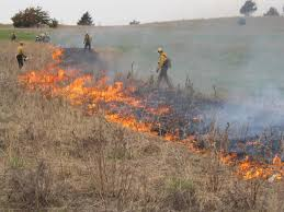 mississippi native plants harnessing fire as a conservation tool friends of the