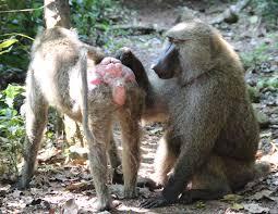 Sexy Monkey Meme - sex monkey business