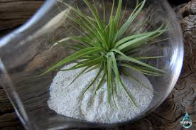 air plant terrarium sand desk planter office plants
