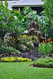 queensland native plants 169 best plants images on pinterest landscaping gardens and