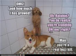 Buzzkill Meme - reaching greater heights i has a hotdog dog pictures funny