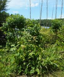 nature u0027s way forest garden