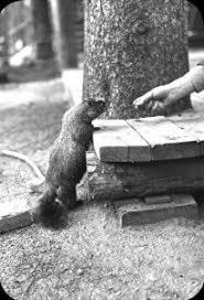 32 groundhog pets knew images pets
