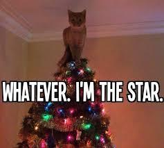 Christmas Tree Meme - christmas tree star cat www slapcaption com christmas tree flickr