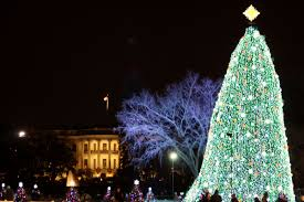 tree from ne wi will to the white house for wkow