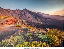 volcano flowers etna flowers stock photos etna flowers stock images alamy