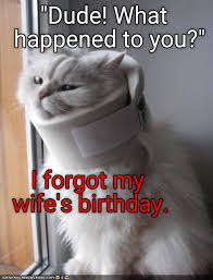 Cat Pics Meme - lolcats birthday lol at funny cat memes funny cat pictures